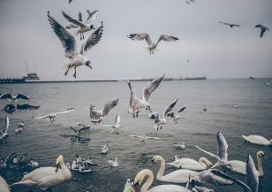 Светът се опитва да спаси биоразнообразието на Земята