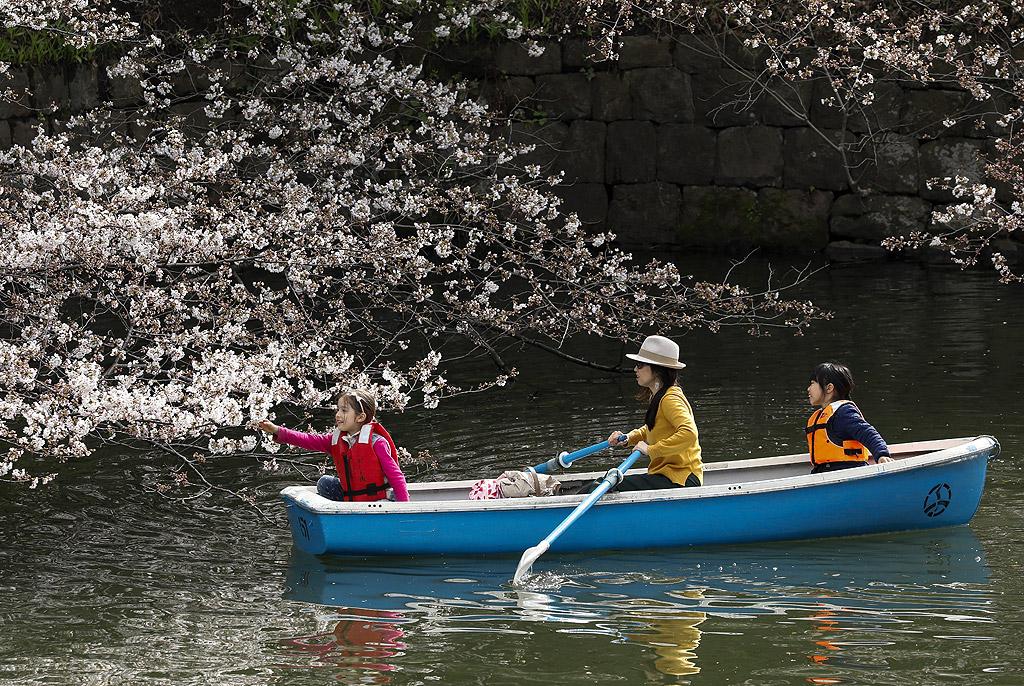 Разходка с лодка сред цъфналите черешови дръвчета в парк в японската столица Токио.