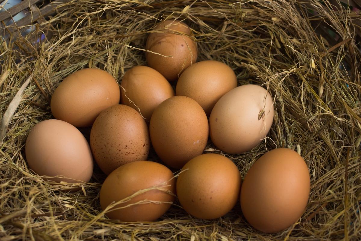 Сурови яйца. Котката ви може да се разболее от салмонела. Протеините в яйцата са полезни за котките, но могат да ги консумират само ако са твърдо сварени.