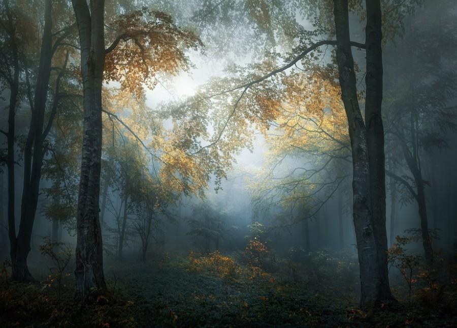 """- Снимката - победител """"Ранна есен"""""""