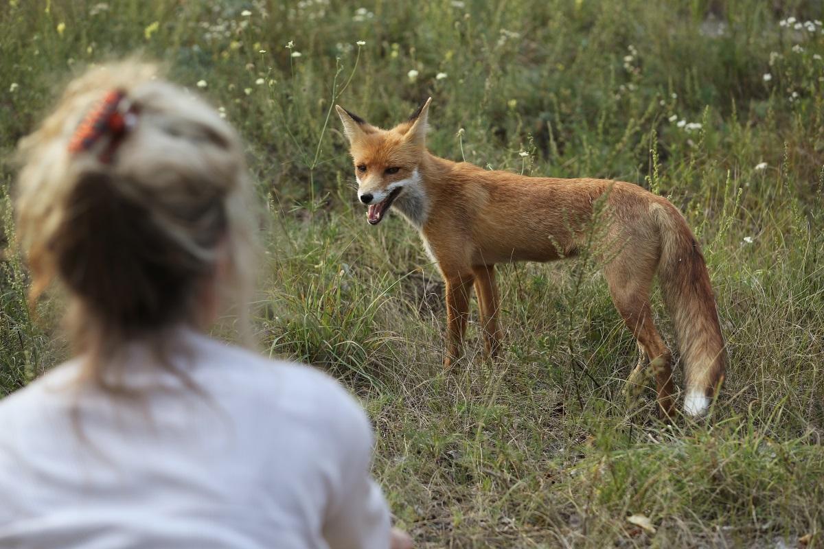 Дивата природа се завръща в района на Чернобил