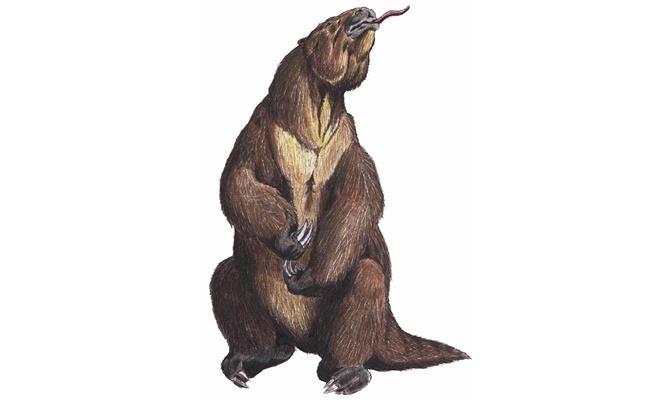 Мегатериум - изчезнал вид ленивец с размерите на слон