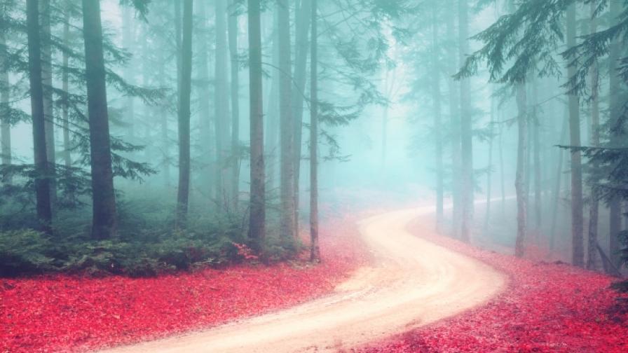Какво означават цветовете в сънищата (СНИМКИ)