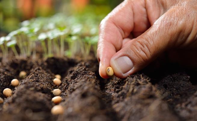 Какво да засадим в градината през август (СНИМКИ)
