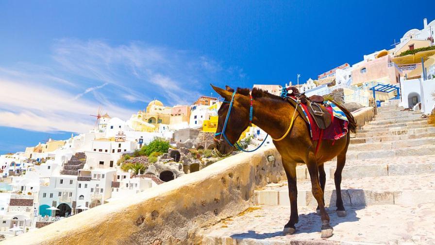 Нова забрана защитава магаретата в Санторини