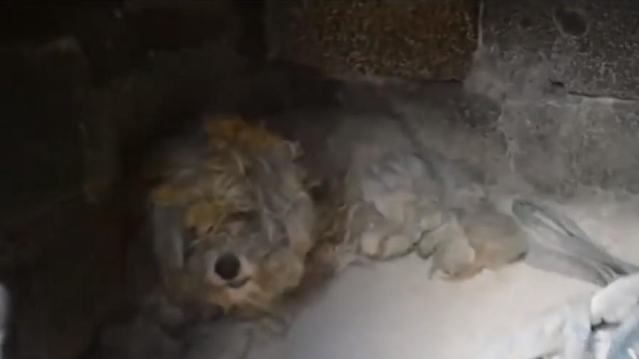 Откриха живо куче под отломките в Гърция