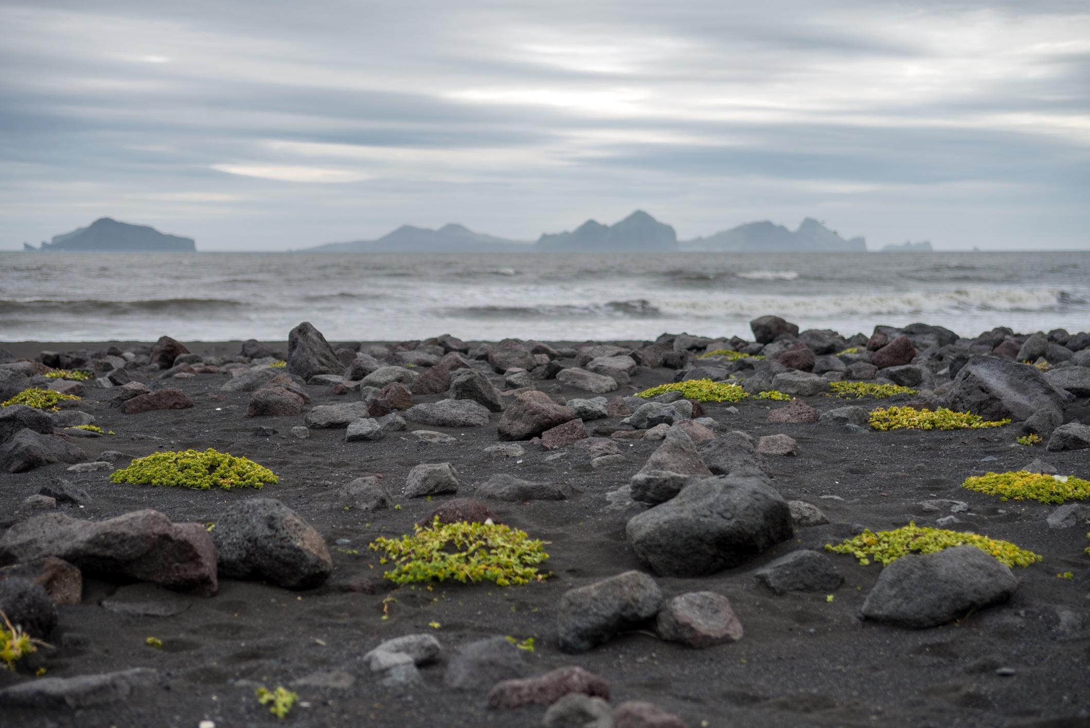 <p>Остров Surtsey, близо до Исландия, е парче земя, образувана през 1963 г., след огромно вулканично изригване, продължило 3 години. Сега земята се използва само за научни изследвания с цел да се разбере как да се формират екосистемите, без човешко въздействие. Има само няколко учени, на които е разрешено да посещават острова.</p>