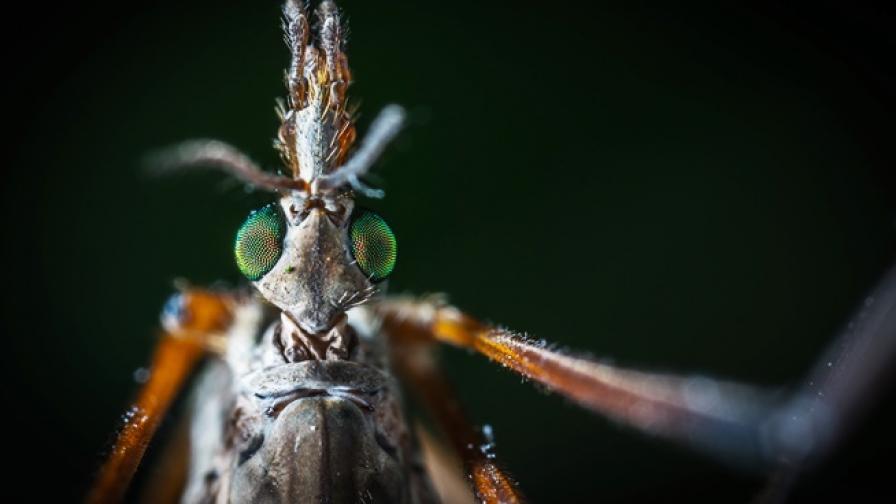 Какво ни прави по-апетитни за комарите