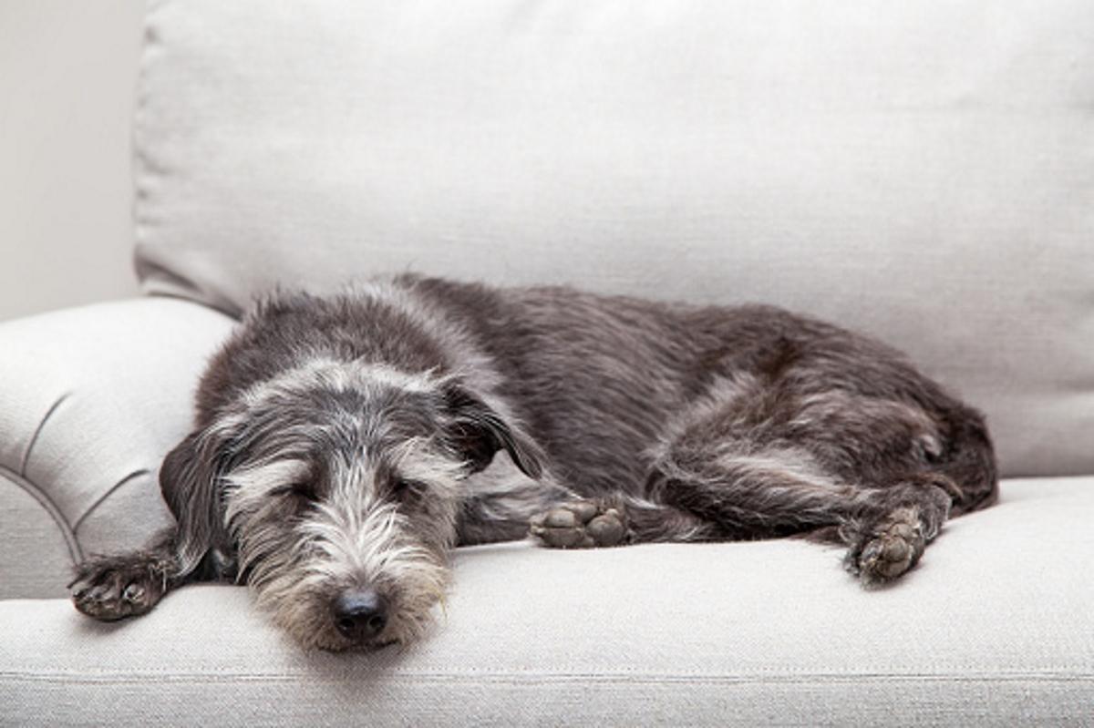 Позата, в която спи кучето.