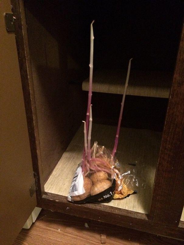 Когато забравиш, че едни картофи в шкафа чакат да ги сготвиш.