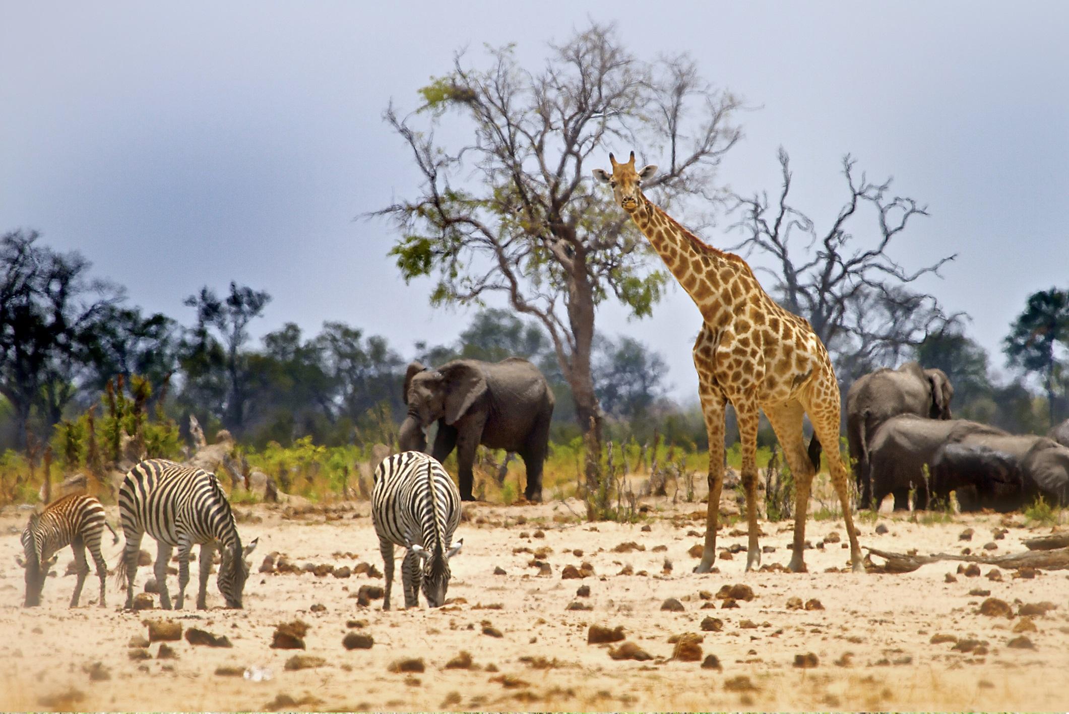 Национален парк Хванге, Зимбабве<br /> <br /> Национален парк Хванге е най-подцененият парк за дивата природа в Африка. Най-големият национален парк в Зимбабве (с почти същата площ като Хавай) се гордее с по-голямо разнообразие от бозайници (108 вида), отколкото всеки друг национален парк в света.