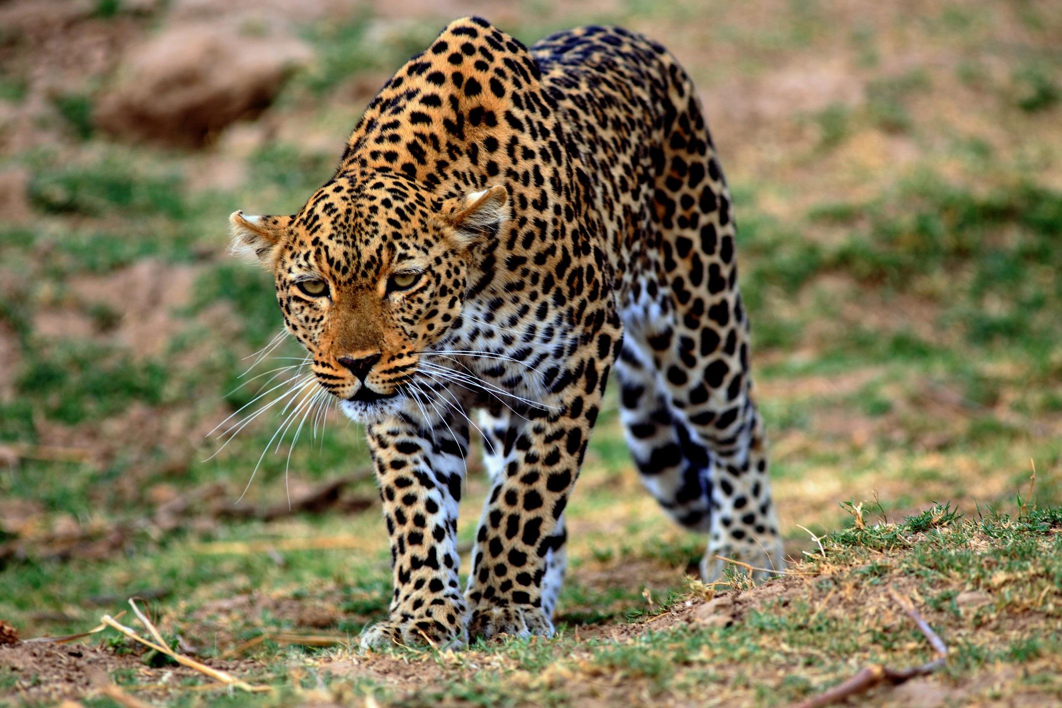 Природен парк Южна Луангва и Национален парк Кафуе, Замбия<br /> <br /> Националният парк Южна Луангва (флагмана на дивата природа в Замбия) е любимо място на многобройните любители на сафарито заради липсата на огромни тълпи, комбинирана с невероятна концентрация на дива природа.