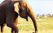 Шест слона загинаха, опитвайки да се спасят един друг