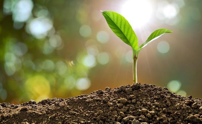 Какво чувстват растенията, когато ги късаме