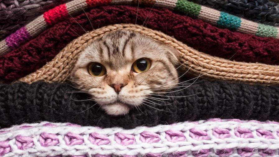 Коте открадна вниманието на модно шоу в Турция