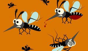 Комари: Какво не знаем за тях - Любопитно | Vesti.bg