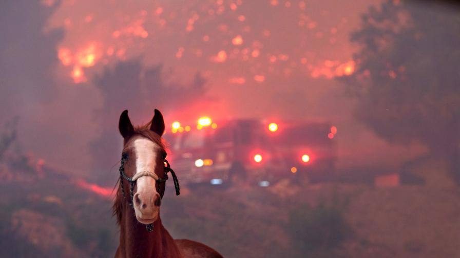 И животните жертви на пожарите, снимки трогнаха
