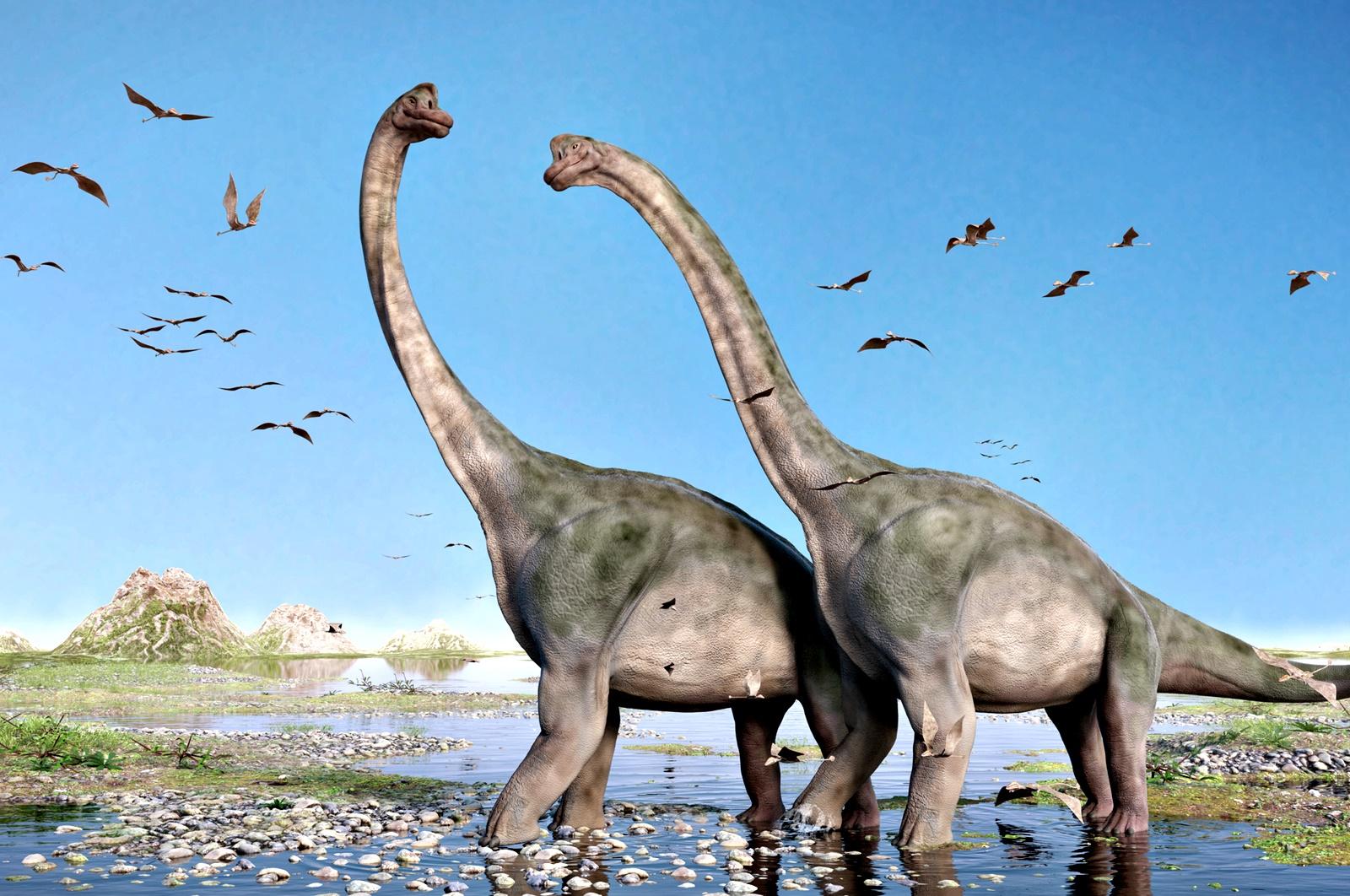 Апатозаври или Бронтозаври?<br /> Апатозаврите, известни и като Бронтозаври, са род тревопасни динозаври от семейство Диплодоци, живели преди около 150 млн. години през юрския период. През 1877 г. палеонотлогът Отинйл Чарлз Марш открива останки от вида и му дава името Апатозавър, две години по-късно открива други останки от други вид и му дава името – Бронтозавър. През 1903 г. обаче палеонтологът Елмър Ригс убеждава научните среди, че става въпрос за един и същи вид. През 2015 г. спорът за името се възражда, след като учени откриват съществени разлики между останките, открити през 1877 и 1879 г., навеждащи на мисълта, че Марш не е допуснал грешка.