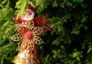 Коледното дърво на Ватикана грейна