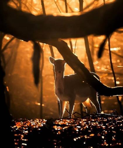 финландия гора животни