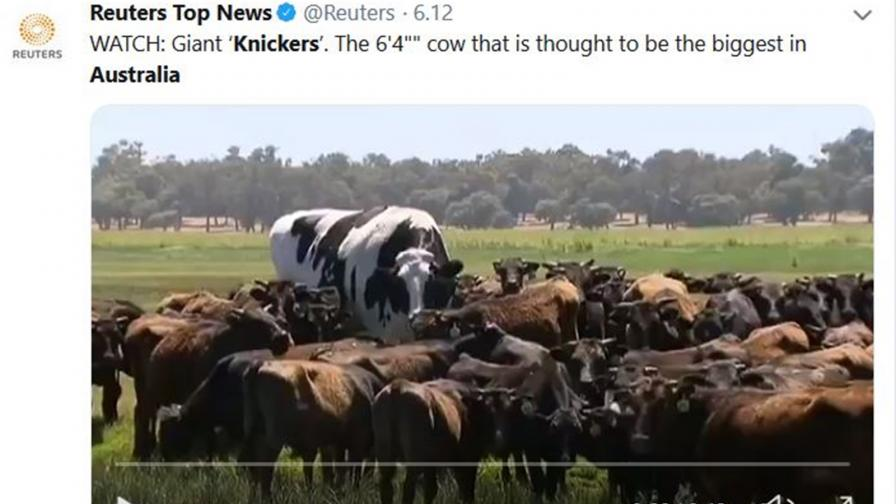 Гигантските животни на Австралия