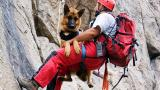 Екатерина Ковачева от ПСС: Набираме дарения за кучетата спасители