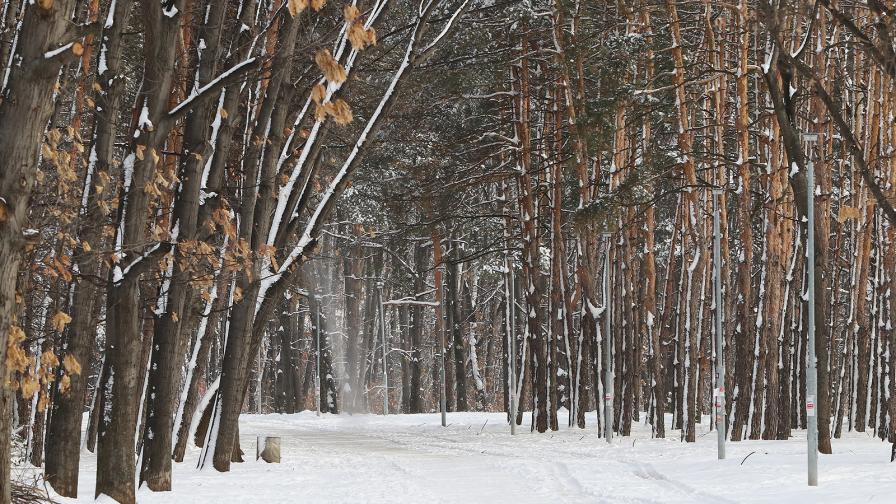 север северен парк зима пързалка шейна