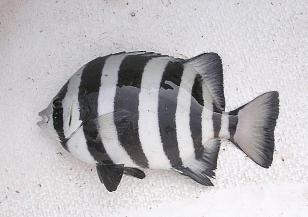 Пътешествието на една риба