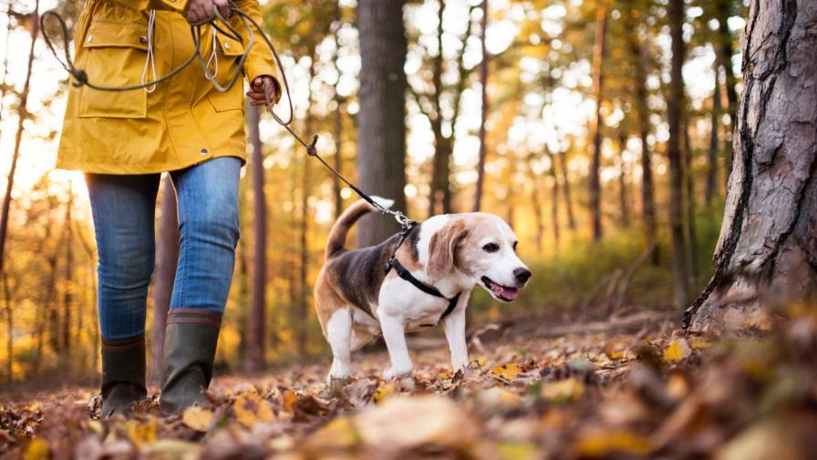 разходка куче жена гора
