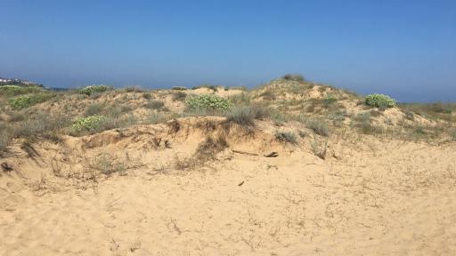 Багер унищожи дюна край Ахтопол