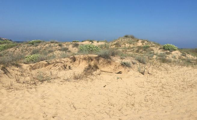Забраниха палатките и чадърите върху дюните