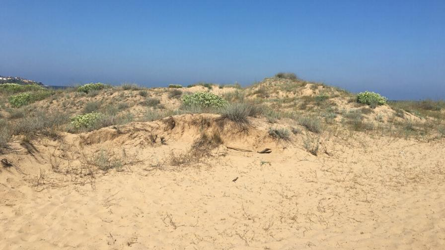<p>Забраниха палатките и чадърите върху дюните</p>