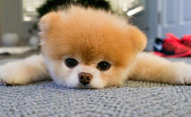 Почина най-сладкото куче в света