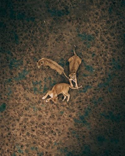 снимки от дрон