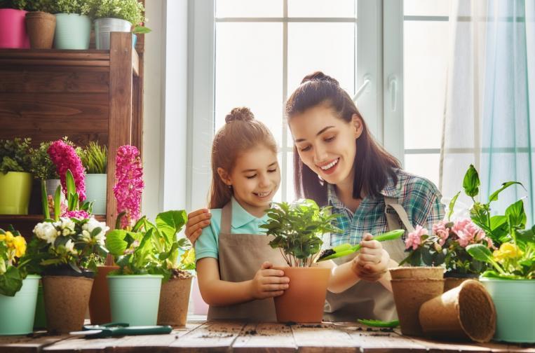 за дома растения декор обзавеждане