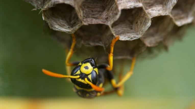 пчели кошер