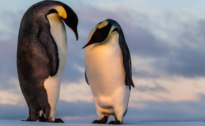 Черният принц на Антарктида