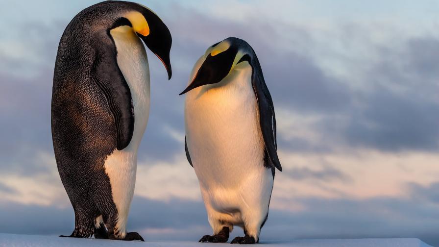 <p>Черният принц на Антарктида</p>