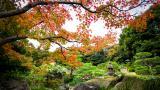 <p>Уникалната тайна на японските столетници</p>