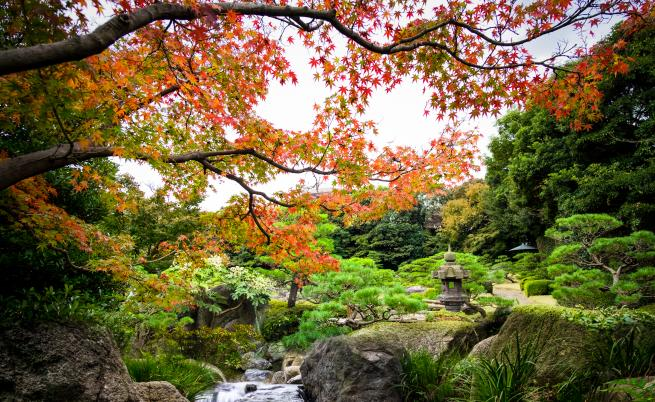 Уникалната тайна на японските столетници