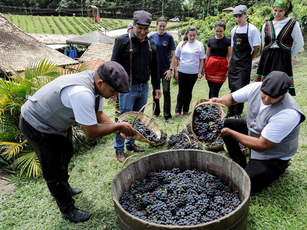 Занаятчийското производство е само 20 000 литра годишно, обем, който е достижим за един час от голям производител на вино.