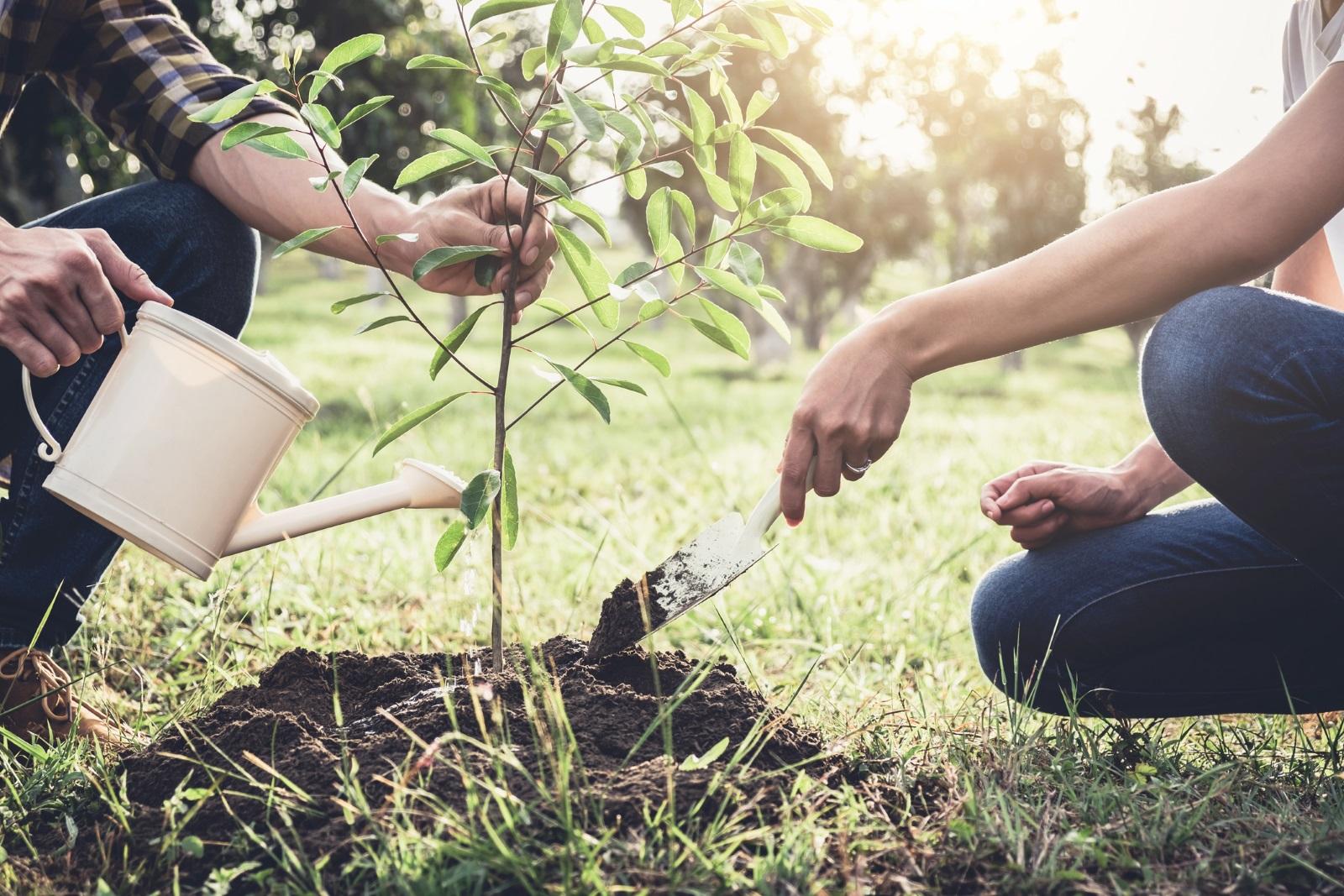 Вярва се, че, ако на Благовещение се засаждат дръвчета,<br /> те ще родят много сладки плодове.