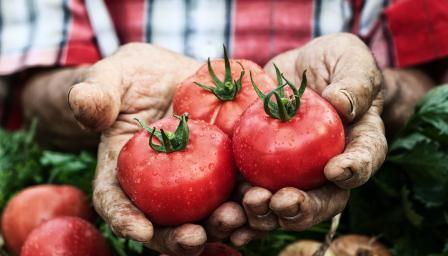 Как да запазим доматите свежи за по-дълго време?