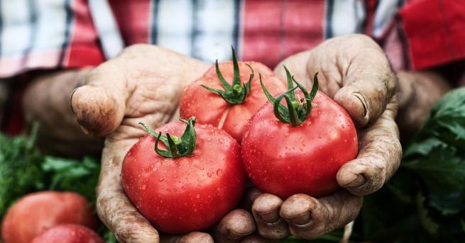 Когато говорим зазапазване свежестта на доматитеза по-дълго време, тук трябва