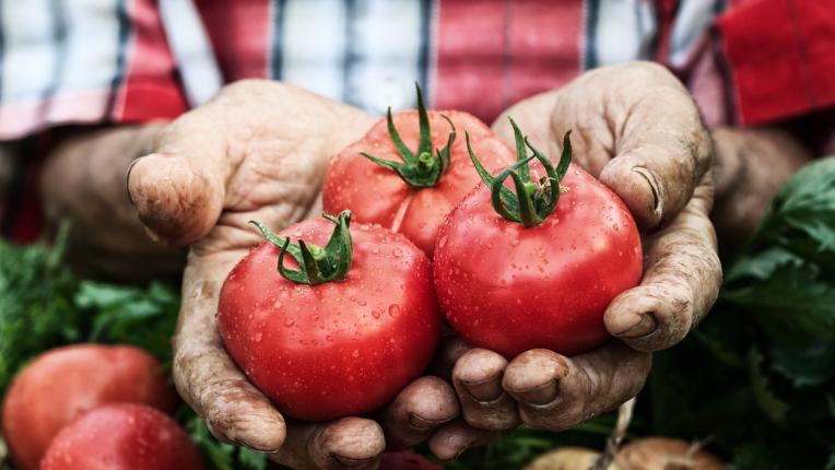 Експресната диета с домати, която топи килограмите за дни