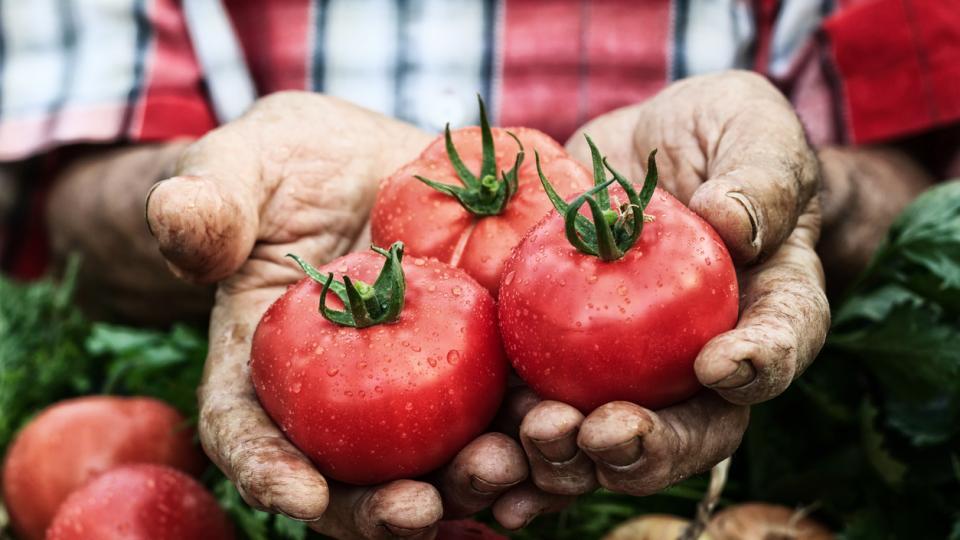 домат домати