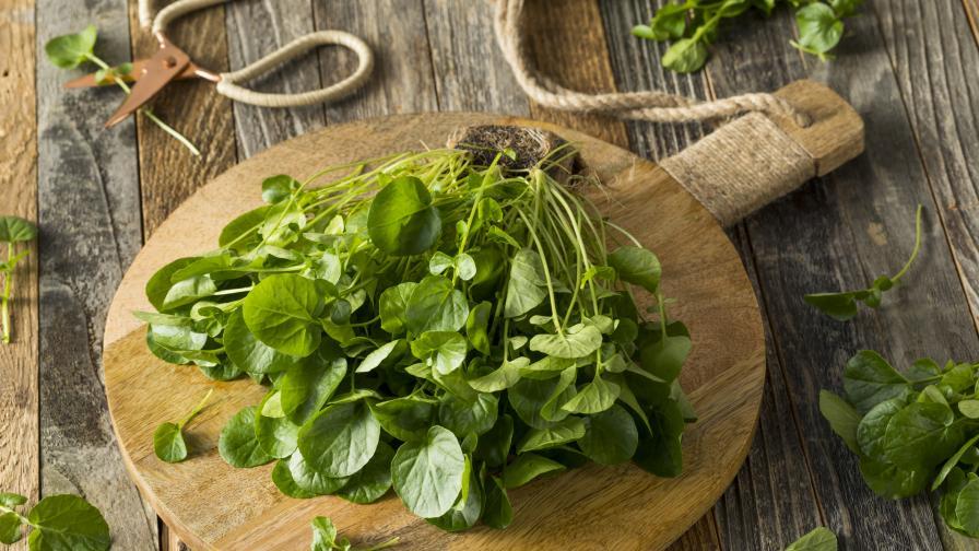 Как да готвим вкусно със зелении
