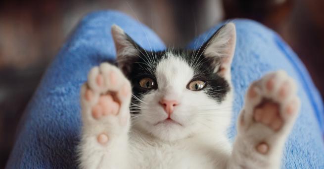 Снимка: Важен съвет за всички стопани на домашни любимци котки