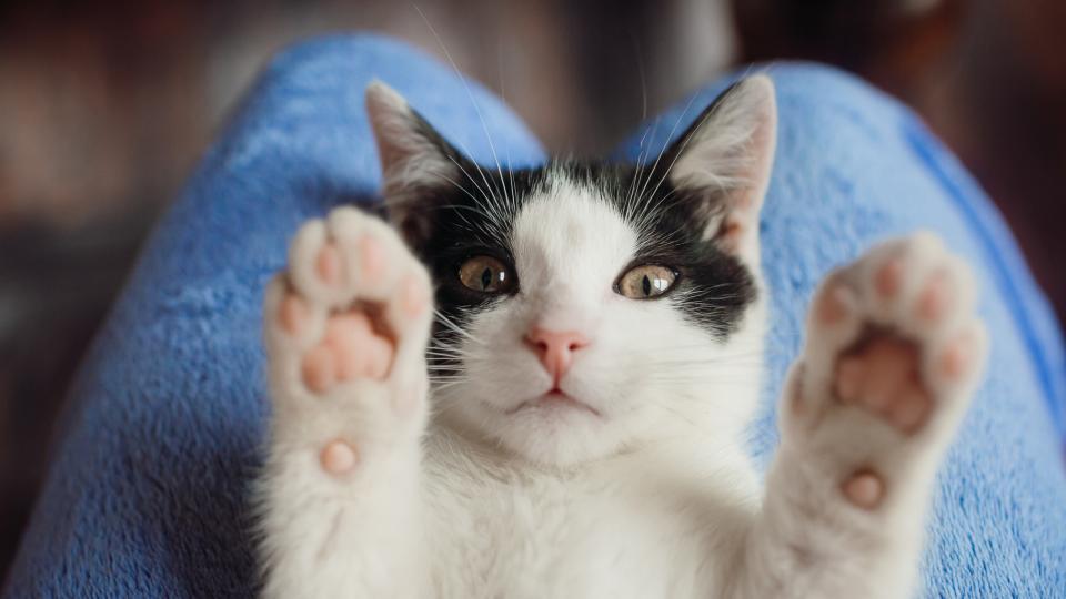Важен съвет за всички стопани на домашни любимци котки