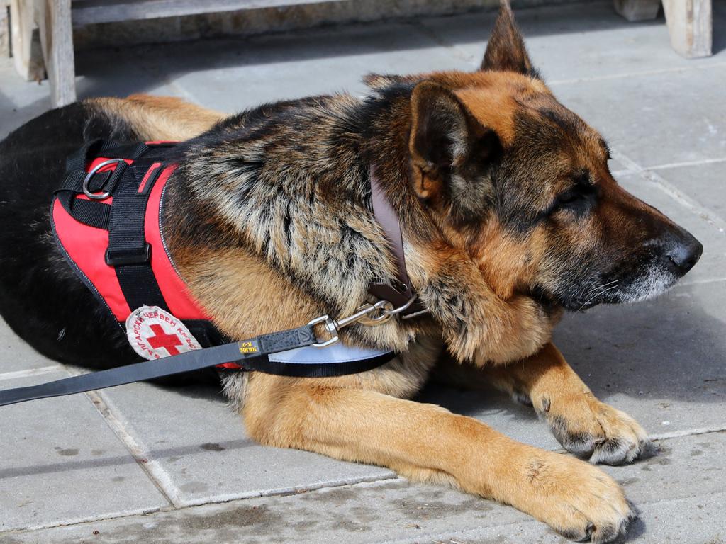 """На 19 април 2019 г. на учебния полигон на Планинската спасителна служба зад хижа """"Алеко"""" се проведе демонстрация, специално организирана по повод 45-та годишнина от създаването на групата за спасяване с кучета."""